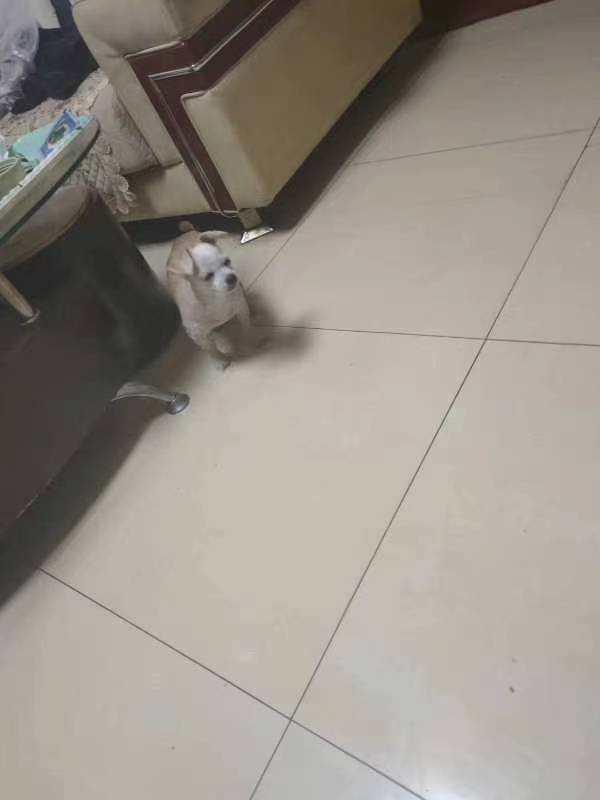 寻狗 启示